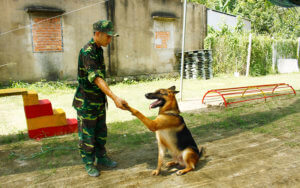 huấn luyện chó becgie