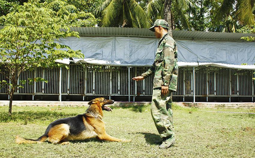 huấn luyện chó bec