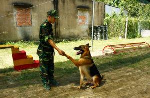 huấn luyện chó ngoan