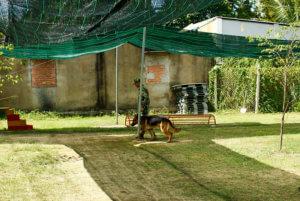 Trung tâm huấn luyện chó cảnh khuyển 24h