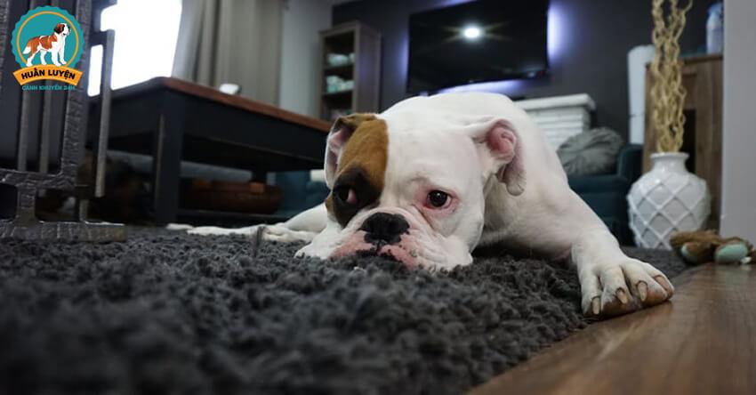 dog-apartment