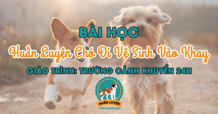 bai-hoc-huan-luyen-cho-di-ve-sinh-vao-khay