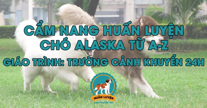 Cách huấn luyện chó Alaska đơn giản tại nhà
