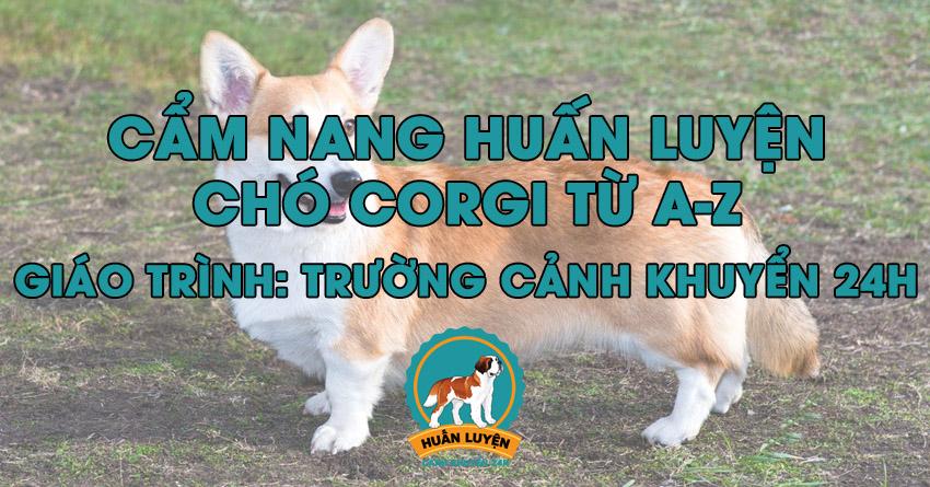 Cách huấn luyện chó Corgi đơn giản tại nhà