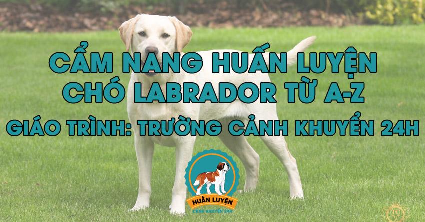 Cách huấn luyện chó Labrador đơn giản tại nhà