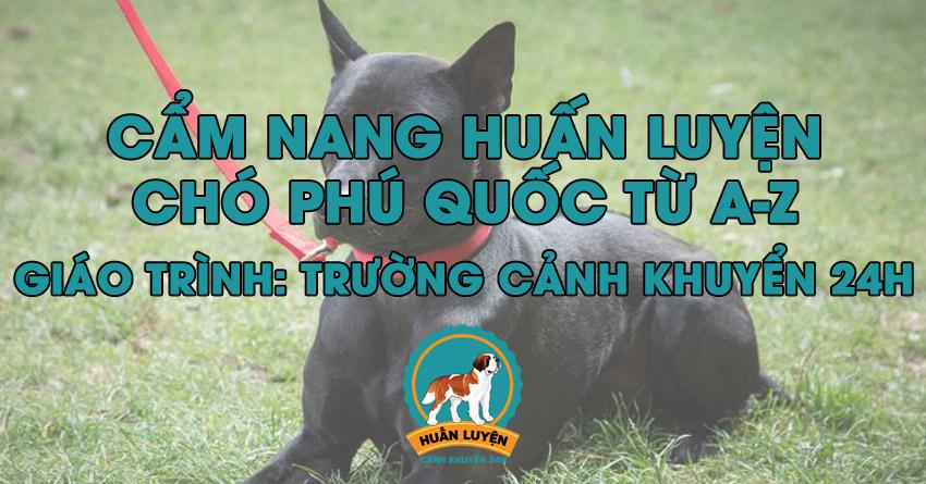 Cách huấn luyện chó Phú Quốc đơn giản tại nhà