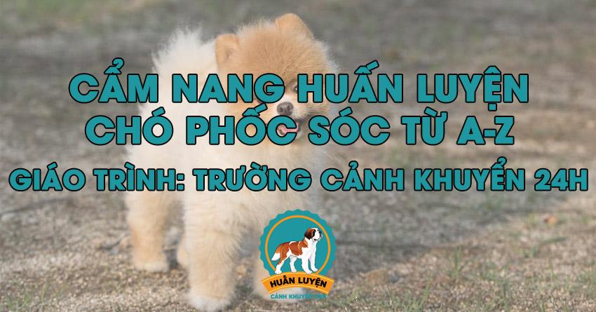 cach-huan-luyen-cho-pomeranian