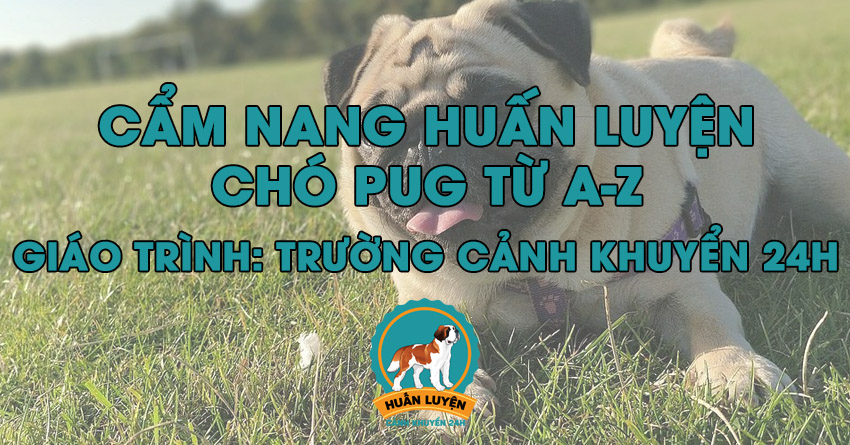 cach-huan-luyen-cho-pug