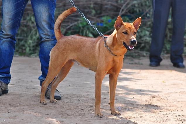 huấn luyện chó ta