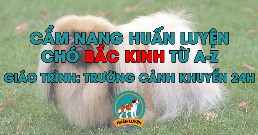 Cách huấn luyện chó Bắc Kinh đơn giản tại nhà