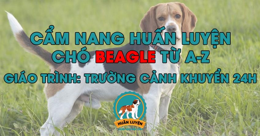 Cách huấn luyện chó Beagle đơn giản tại nhà