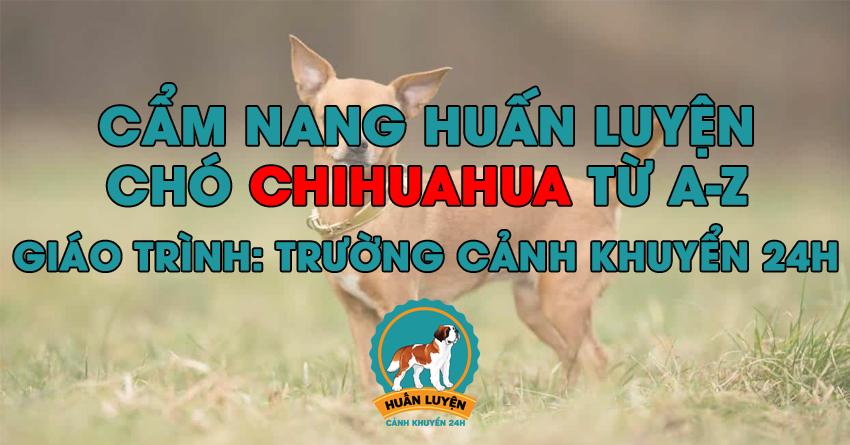 Cách huấn luyện chó Chihuahua đơn giản tại nhà