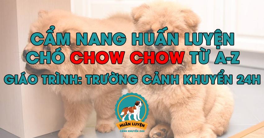 Cách huấn luyện chó Chow Chow đơn giản tại nhà