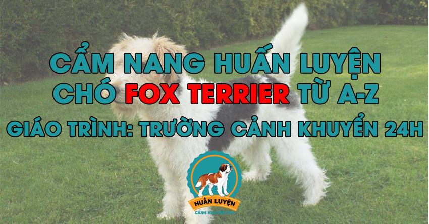 Cách huấn luyện chó Fox Terrier đơn giản tại nhà