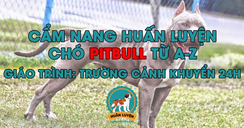 Cách huấn luyện chó Pitbull đơn giản tại nhà