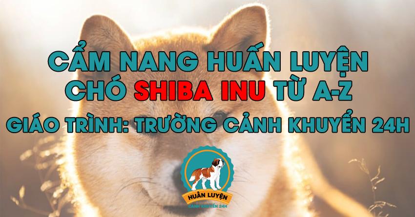 Cách huấn luyện chó Shiba Inu đơn giản tại nhà